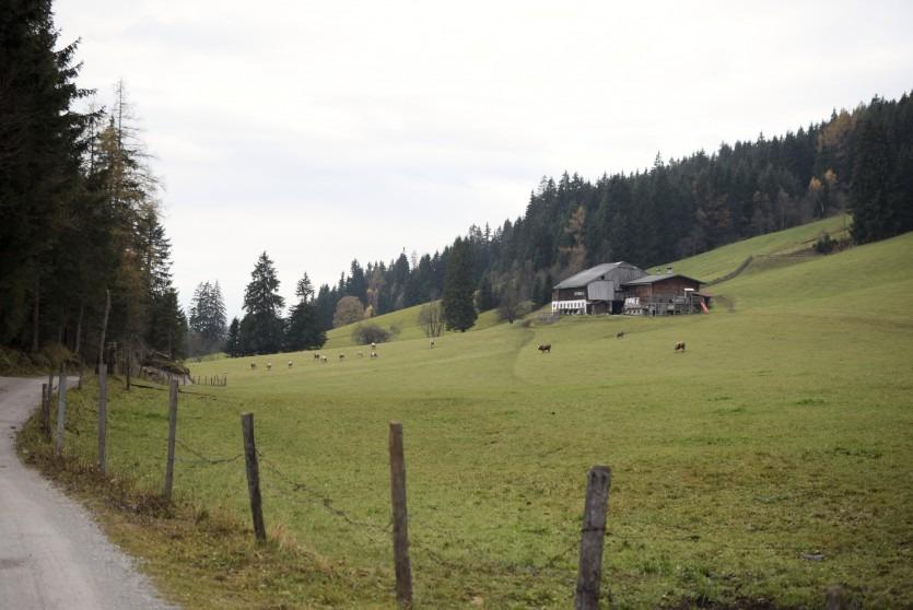 Die Kuh-Challenge der Andechser Bio-Molkerei